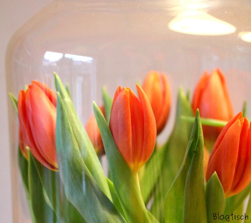 orange blogtisch. Black Bedroom Furniture Sets. Home Design Ideas